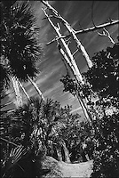 "Crandon Park<br /> From ""The other Wind"" series. Key Biscayne, Florida, 2008"