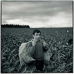 JULY 1995    -  MELBOURNE , Australia   -   A brussel sprouts farmer with his crop. .