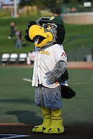 South Bend Silver Hawks mascot Swoop salutes the umpires before a game against the Bowling Green Hot Rods on August 20, 2013 at Stanley Coveleski Stadium in South Bend, Indiana.  Bowling Green defeated South Bend 3-2.  (Mike Janes/Four Seam Images)