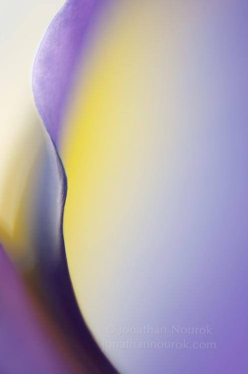 close-up / macro photograph of a blue / purple iris flower