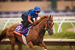 DEL MAR, CA - OCTOBER 29:  Wuheida, owned by Godolphin Stable Lessee and trained by Charlie Appleby, exercises in preparation for Breeders' Cup Filly & Mare Turf at Del Mar Thoroughbred Club on October 29, 2017 in Del Mar, California. (Photo by Alex Evers/Eclipse Sportswire/Breeders Cup)