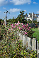 Charming house and yard, Cape Cod, Massachusetts, USA