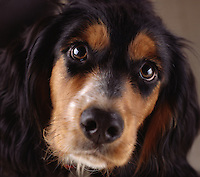 Dog with black, brown and white coloring..