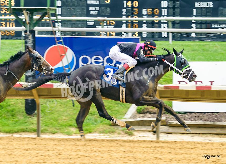 Tough Teddy winning at Delaware Park on 8/8/16