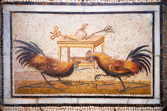Roman Mosaic portrait of a Cockerall Fight  from Pompei Archaeological Site. Naples Archaeological Museum