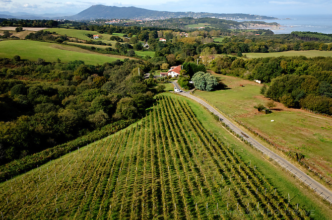 Vineyards belonging to local winemaker Emmanuel Poirmeur are seen near Urrugne in the Basque country on the Atlantic coast of France on Oct. 7, 2014.