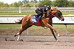 #54Fasig-Tipton Florida Sale,Under Tack Show. Palm Meadows Florida 03-23-2012