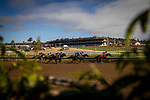 AUG 09: Horses race at Del Mar Thoroughbred Club in Del Mar, California on August 09, 2020. Evers/Eclipse Sportswire/CSM