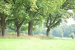 Europa, DEU, Deutschland, Niedersachsen, Landkreis Osterholz , Lilienthal , Baumreihe, Eichen, Natur, Umwelt, Landschaft, Jahreszeiten, Stimmungen, Landschaftsfotografie, Landschaften, Landschaftsphoto, Landschaftsphotographie, <br /> <br /> [Fuer die Nutzung gelten die jeweils gueltigen Allgemeinen Liefer-und Geschaeftsbedingungen. Nutzung nur gegen Verwendungsmeldung und Nachweis. Download der AGB unter http://www.image-box.com oder werden auf Anfrage zugesendet. Freigabe ist vorher erforderlich. Jede Nutzung des Fotos ist honorarpflichtig gemaess derzeit gueltiger MFM Liste - Kontakt, Uwe Schmid-Fotografie, Duisburg, Tel. (+49).2065.677997, ..archiv@image-box.com, www.image-box.com]