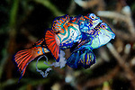 Fish ID Indo-Pacific