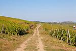 Europa, DEU, Deutschland, Rheinland-Pfalz, Mittelrheintal, Ruedesheim am Rhein, Weinberg, Weinbau, Weinanbau, Rebbau, Weg, Natur, Umwelt, Landschaft, Landschaftsfotos, Landschaftsfotografie, Landschaftsfoto, Tourismus, Touristik, Touristisch, Touristisches, Urlaub, Reisen, Reisen, Ferien, Urlaubsreise, Freizeit, Reise, Reiseziele, Ferienziele, Ruedesheim am Rhein ist eine Weinstadt im hessischen Rheingau-Taunus-Kreis und liegt mit dem gegenueberliegenden Bingen am suedlichen Tor zum Mittelrheintal. Ruedesheim gehoert mit zum UNESCO-Welterbe Oberes Mittelrheintal.<br /> <br /> [Fuer die Nutzung gelten die jeweils gueltigen Allgemeinen Liefer-und Geschaeftsbedingungen. Nutzung nur gegen Verwendungsmeldung und Nachweis. Download der AGB unter http://www.image-box.com oder werden auf Anfrage zugesendet. Freigabe ist vorher erforderlich. Jede Nutzung des Fotos ist honorarpflichtig gemaess derzeit gueltiger MFM Liste - Kontakt, Uwe Schmid-Fotografie, Duisburg, Tel. (+49).2065.677997, ..archiv@image-box.com, www.image-box.com]