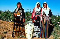 Syria, El Haseke, Sept. 1989..Young women in colorful traditional dress picking cotton in the far North East of Syria....Jong vrouwen in traditionele klederdracht tijdens de katoen pluk in het verre Noord-Oosten van Syrie...Photo  Kees Metselaar