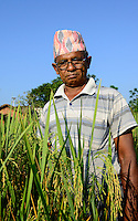 NEPAL, Terai, Chitwan Nationalpark , village Kapaphori, Tikauli Bufferzone community, rice farmer  / Nepal, Terai, Chitwan Nationalpark, Dorf Kaparphori, Tikauli Bufferzone community, Reisfarmer Chandra Bahadur Adhikari