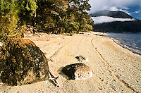 Shore of Lake Alabaster on Hollyford Track - Fiordland NP, Southland, New Zealand