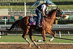 ARCADIA, CA  OCTOBER 25: Breeders' Cup Juvenile Turf Sprint entrant Fair Maiden, trained by Eoin G. Harty, exercises in preparation for the Breeders' Cup World Championships at Santa Anita Park in Arcadia, California on October 25, 2019.(Photo by Casey Phillips/Eclipse Sportswire/CSM)