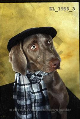 Interlitho, Alberto, ANIMALS, dogs, photos, hunting dog, cap(KL1999/3,#A#) Hunde, perros