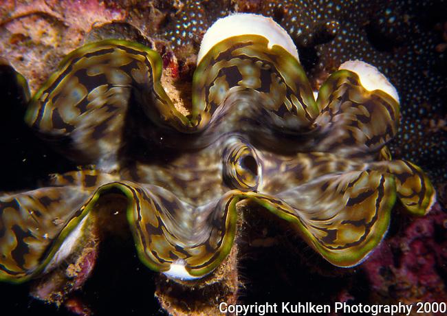 Giant clam, Thailand, 2000 (Nikonos V)