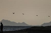 Brown pelicans or gray pelicans, Pelecanus occidentalis, Brown pelican, flies against the light with a view of Alcatraz Island off the coast of Kino Bay, Sonora, Mexico. Landscape, sea and beach on Alcatras Island in the Gulf of California, Sea of Cortez or Bermejo Sea, which is located between the Baja California peninsula. tourist destination. land, dry land on the horizon<br /> (Photo: Luis Gutierrez / NortePhoto.com).<br /> <br /> pelicanos pardo o pelicano gris, Pelecanus occidentalis, Brown pelican, vuela a contraluz con vista a la isla Alcatraz en la costa de la bahia de Kino, Sonora, Mexico. Paisaje, mar y playa en isla Alcatras el Golfo de California, Mar de Cortés o Mar Bermejo, que se encuentra entre la península de Baja California. destino turístico. tierra, tierra firme en el horizonte<br /> (Photo: Luis Gutierrez / NortePhoto.com).