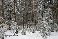 WT05-507z  Maine forest scene with snow cover