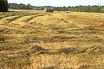 Farmer haying a field