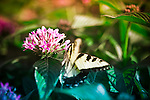 A butterfly lands on one of many flower displays at Longwood Gardens in Kennett Square, Pennsylvania.