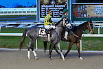 January 16, 2016: Destin with Julien R Leparoux up in the Lecomte Stakes in New Orleans Louisiana. Steve Dalmado/ESW/CSM