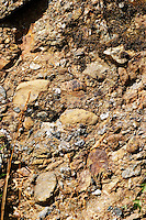 Pouding, common soil type, like concrete with embedded rocks. Domaine Jo Pithon, Anjou, Loire, France