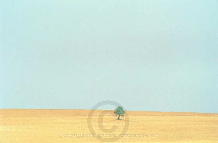 A dry field with a single tree, blue sky, sun haze, a scorching hot summer, Bourgogne