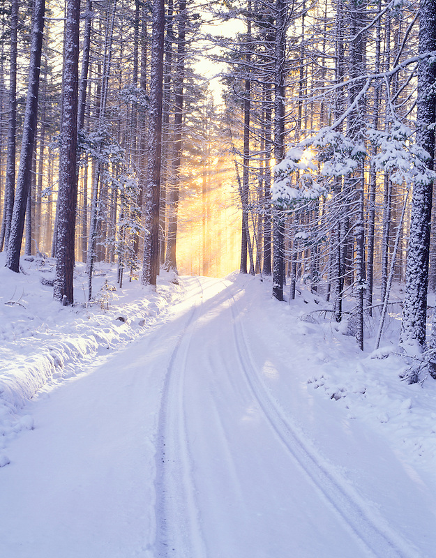 M00181M.tiff   Road in deschutes National Forest with snow and sunburst. Oregon