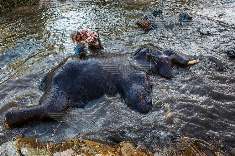 Kalu Say gives a bath to Pho Khwar, his elephant who is the same age as the mahout.