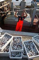 Pescatori al porto scaricano il pescato. Fishermen at the fish port unload their catch.....
