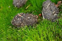 Waldkauz, Gewölle, Speiballen aus unverdaulichen Nahrungsresten, Strix aluco, Wald-Kauz, Kauz, Käuzchen, tawny owl, hairball, pellet