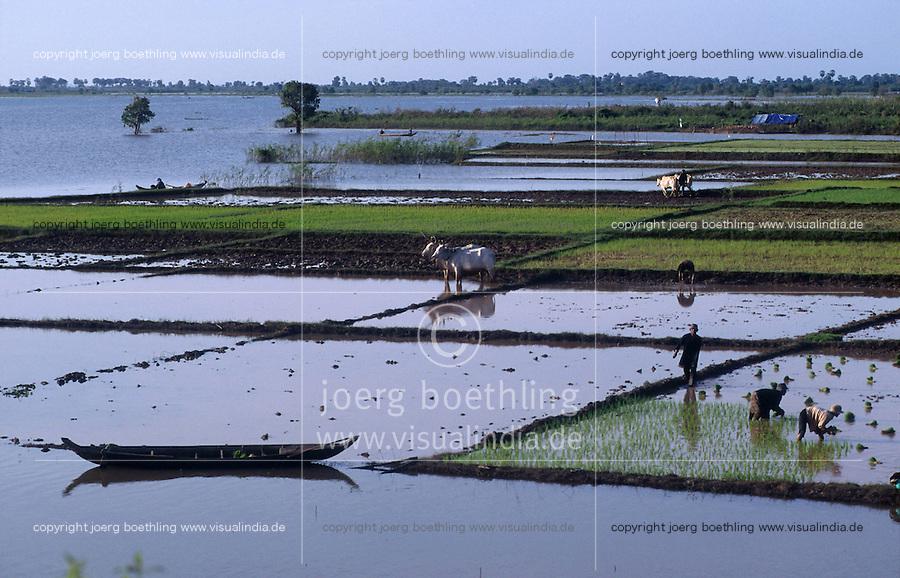 CAMBODIA, rice farming at Mekong river after Monsoon and submergence / KAMBODSCHA Reisanbau am Mekong nach Monsun Regen und Überschwemmung