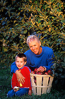 Boy and his grandmother picking apples in an orchard.