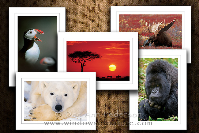 """Collection I<br /> Limited Edition Images Now Available On Beautiful Note Cards<br /> Boxed Collection Set<br /> Size: 5""""x7""""<br /> Printed on FSC Certified Paper using environmentally friendly vegetable & soy based inks.<br /> 120# Matt Card Stock<br /> Beveling Around Image<br /> Clear Foil Treatment Over Image For Real Photo Look<br /> Blank Inside For Your Personal Message<br /> Back Features Photo Caption & Artist Bio"""