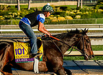 October 26, 2019 : Breeders' Cup Distaff entrant Elate, trained by William I. Mott, exercises in preparation for the Breeders' Cup World Championships at Santa Anita Park in Arcadia, California on October 26, 2019. Scott Serio/Eclipse Sportswire/Breeders' Cup/CSM