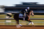 November 4, 2020: Speech, trained by trainer Michael W. McCarthy, exercises in preparation for the Breeders' Cup Filly & Mare Sprint at Keeneland Racetrack in Lexington, Kentucky on November 4, 2020. Gabriella Audi/Eclipse Sportswire/Breeder's Cup/CSM