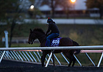 October 30, 2020: Four Wheel Drive, trained by trainer Wesley A. Ward, exercises in preparation for the Breeders' Cup Turf Sprint at Keeneland Racetrack in Lexington, Kentucky on October 30, 2020. Alex Evers/Eclipse Sportswire/Breeders Cup