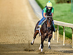 LOUISVILLE, KY - MAY 02: Carina Mia, trained by Bill Mott, exercises and prepares during morning workouts for the Kentucky Derby and Kentucky Oaks at Churchill Downs on May 2, 2016 in Louisville, Kentucky. (photo by John Voorhees/Eclipse Sportswire/Getty Images)