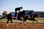 November 4, 2020: Madone, trained by trainer Simon Callaghan, left, and Maximum Security, trained by trainer Bob Baffert, exercise in preparation for the Breeders' Cup Classic at Keeneland Racetrack in Lexington, Kentucky on November 4, 2020. Gabriella Audi/Eclipse Sportswire/Breeder's Cup/CSM