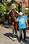 DEL MAR, CA  AUGUST 7:  #3 Pappacap, ridden by Joe Bravo, enters the paddock before the Best Pal Stakes (Grade ll) on August 7, 2021 at Del Mar Thoroughbred Club in Del Mar, CA.(Photo by Casey Phillips/Eclipse Sportswire/CSM)