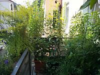 links gelb blühend: Labkraut, hinten gelb blühend: Nachtkerzen<br /> Europe, Germany, Ruhr Area, Wetter<br /> <br /> Europa, Deutschland, Ruhrgebiet, Wetter<br /> <br /> [MODEL RELEASE: NO, Copyright: Vera Schimetzek, Bornstrasse 5, 58300 Wetter, Germany, phone: 0049.2335.970650, mobil: 0049.151.21220918, www.schimetzek-foto.de, schimetzek@web.de,<br /> Die Verwendung des Fotos ist honorarpflichtig. Keine Verwendung ohne Genehmigung.  Es gelten die AGB.<br /> For use the general terms and conditions are mandatory. No use without permission. The use of the image is subject to a fee.]
