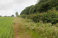 15-6-2021 Field margin in Oxfordshire <br /> ©Tim Scrivener Photographer 07850 303986<br />      ....Covering Agriculture In The UK....