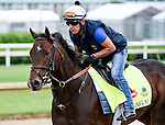 LOUISVILLE, KY - MAY 01: Shagaf, trained by Chad Brown and owned by Shadwell Stable, exercises and prepares during morning workouts for the Kentucky Derby and Kentucky Oaks at Churchill Downs on May 1, 2016 in Louisville, Kentucky. (photo by John Voorhees/Eclipse Sportswire/Getty Images)
