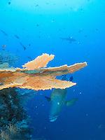 Palau Blue Corner