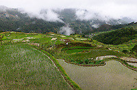 PHILIPPINES, Mountain Province, Cordilleras, rice farming on rice terrace in mountains near Sagada / PHILIPPINEN, Mountain Province, Cordilleras, Reisanbau und Reisfelder in Terrassen in den Bergen bei Sagada