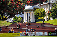 Fans sit by the William Wakefield Memorial during the women's Dream11 Super Smash cricket match between the Wellington Blaze and Auckland Hearts at Basin Reserve in Wellington, New Zealand on Thursday , 24 December 2020. Photo: Dave Lintott / lintottphoto.co.nz