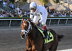 11 February 05: Cal Nation and John Velazquez win the 8th race at Gulfstream Park in Hallandale Beach, Florida on Donn Handicap Day.  (Bob Mayberger/Eclipse Sportswire)