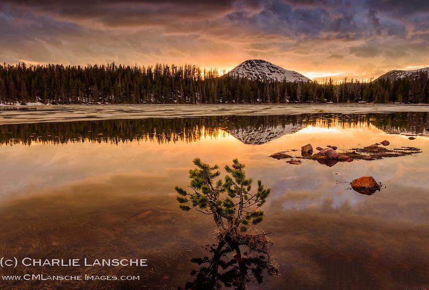 Lone Pine, Uinta Mountains, Utah June