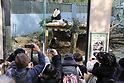 Female giant panda cub Xiang Xiang and her mother Shin Shin at Ueno Zoo